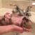 Cute Puppy Shower