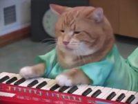 Keyboard Cat Bento A Tribute thumb19493
