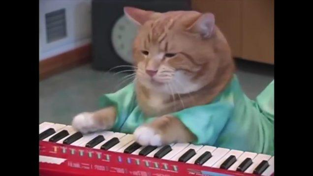 Keyboard Cat, Bento, A Tribute thumbnail