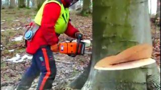 (1) Modern Dangerous Chainsaw Huge Tree Felling Cutting Down Felling Wedge Lumberjack Skills thumbnail 2