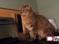 Funny Cat Antics thumb0