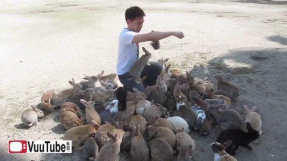 Man Destroyed by Killer Rabbits thumbnail 1