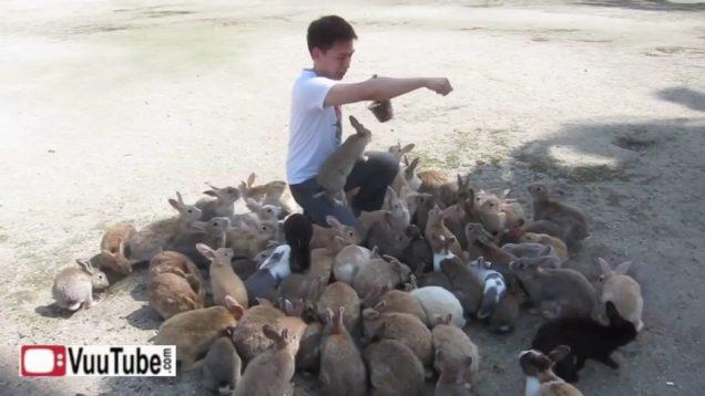 Man Destroyed by Killer Rabbits 1 thumb0