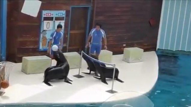 Seals Are At Volleyball.mp4 thumb4598