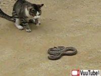 Cat Vs Snake 1 thumb1426