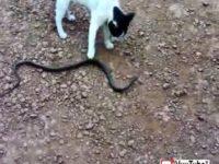 Cat Vs Snake 2 thumb13032