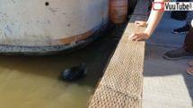 friendly seal really hates asians thumb0